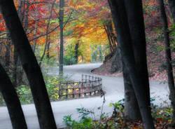 Foto autunno