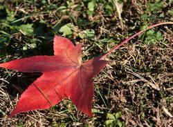 Foto autunno nel giardino di casa mia a Corgeno Andrea Bellini