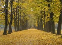 ispra autunno