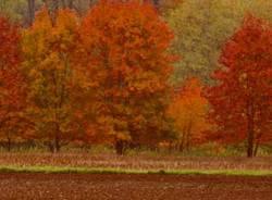 magnago autunno