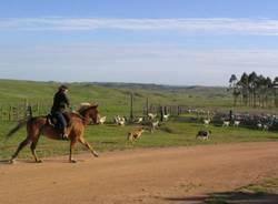 uruguay cavallo