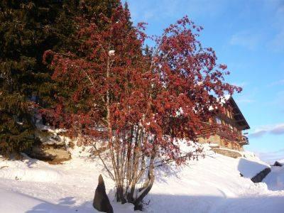 albero di Natale naturale