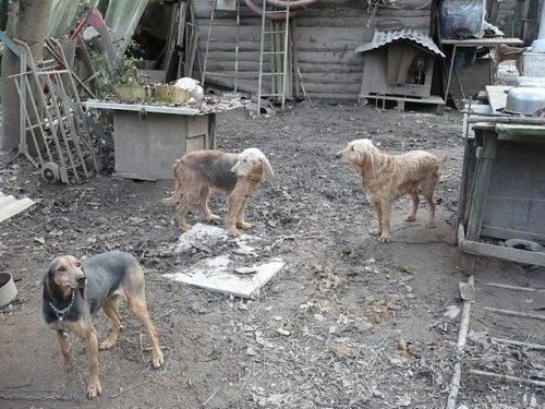 cani arsago seprio sequestro dicembre 2009