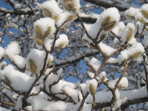 foto lettori neve dicembre 2009 ennesima tranche