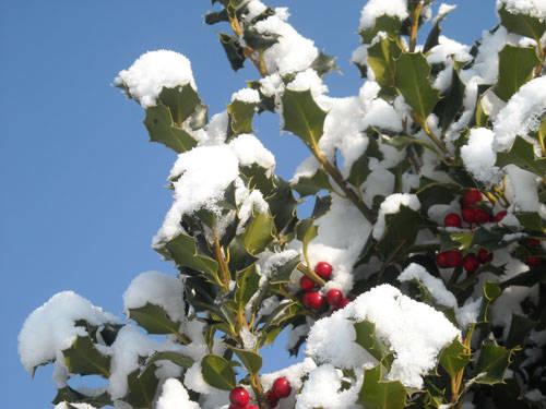foto neve lettori dicembre 2009