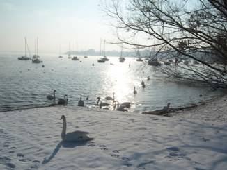 Neve, cigni e lago