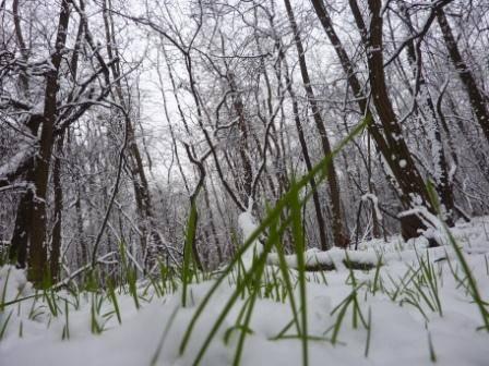 Neve in brughiera