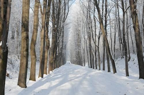 Nevicata ispra