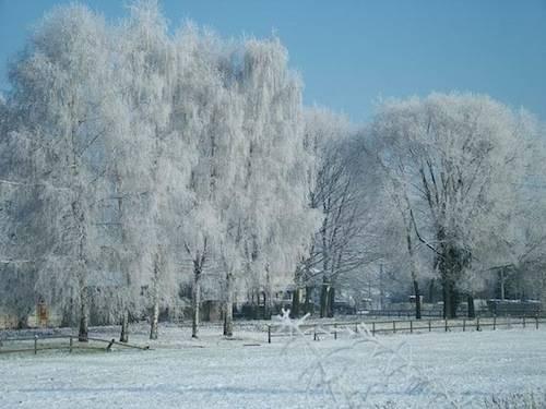 Ricami invernali