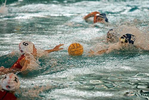pallanuoto varese fiorentina Foto Cottini/Sportlight