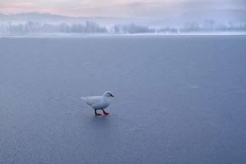 Lago di Varese ghiacciato