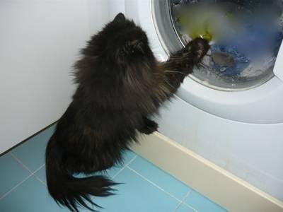 Milù osserva il topolino!