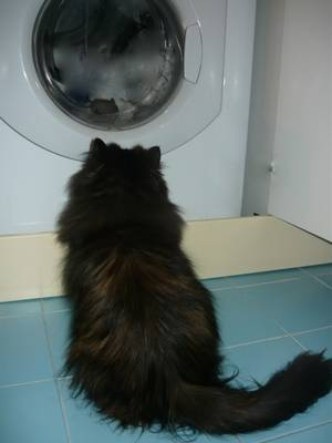Milù,osserva la lavatrice col topolino!