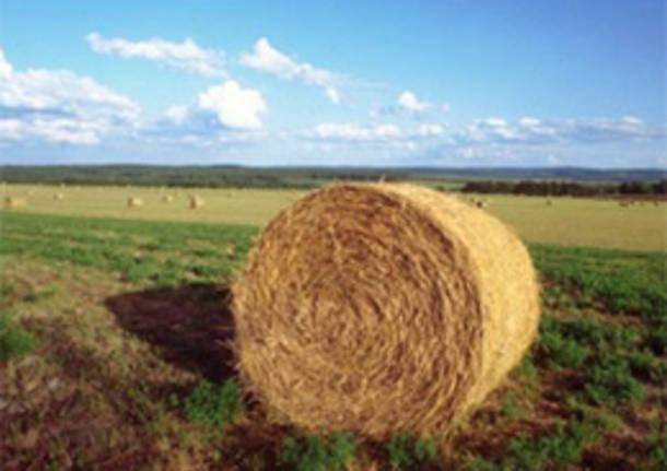 agricoltura varese apertura