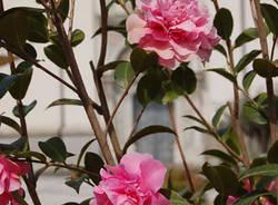 busto arsizio fiori piazza santa maria primavera