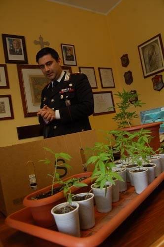 droga marijuana gallarate carabinieri michele la stella
