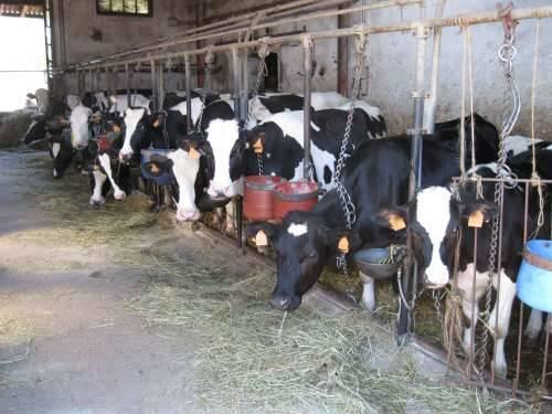 molteni latte busto arsizio maggio 2010