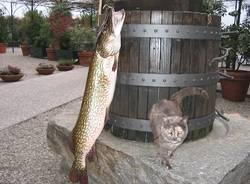 lago pesci luccio 9 chili
