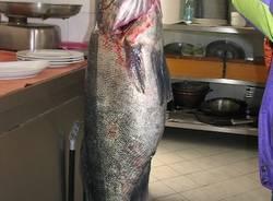 lago pesci sandra 8 chili