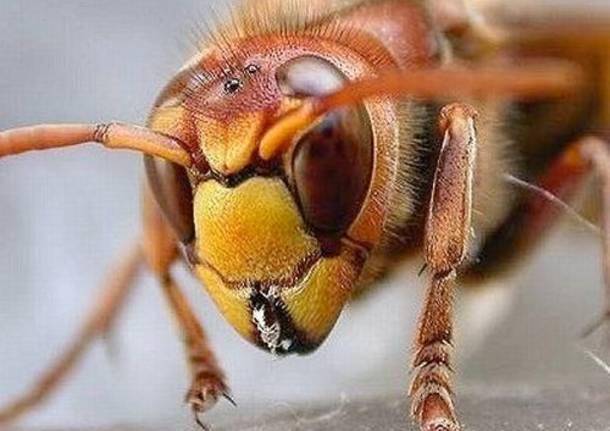nidi di calabroni, ci pensa la protezione civile