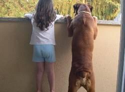 cani dei lettori