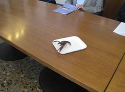 gamberi louisiana conferenza stampa