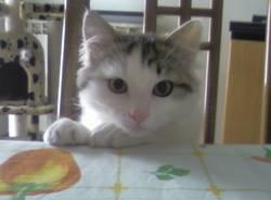 gatti dei lettori