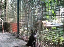 gatti rifugio la fabbrica delle fusa busto arsizio agosto 2010