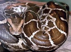 mostra serpenti reptilia