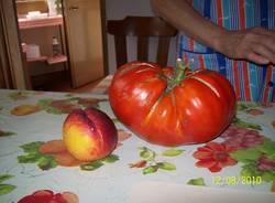 pomodoro nonno Lino Azzate