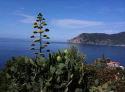 vespa galleria liguria toscana maro giovannelli