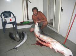 squalo galleria