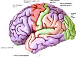 cervello umano psichiatria
