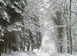 neve lettori 6 dicembre 2010
