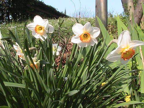 fiori primavera 2011