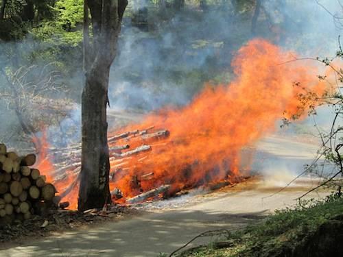 incendio campo dei fiori aprile 2011