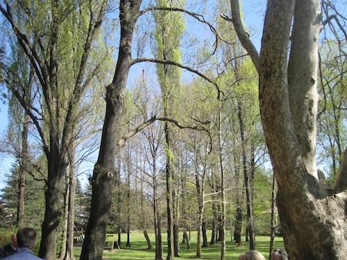 tree climbing villa mylius