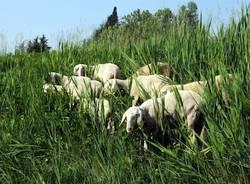 pecore whirlpool 2