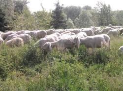 pecore Whirpool