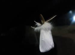 farfalle bianche