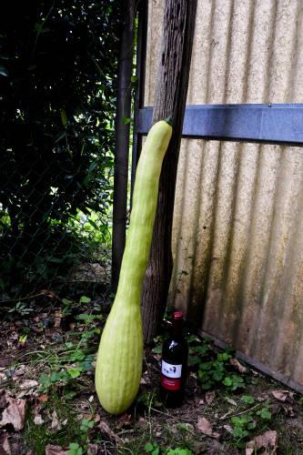 9kg di zucchina!