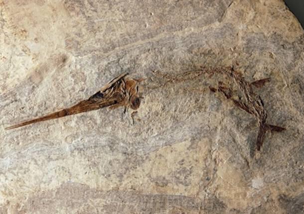 archeologia monte san giorgio