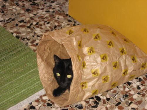 Il gatto nel sacchetto