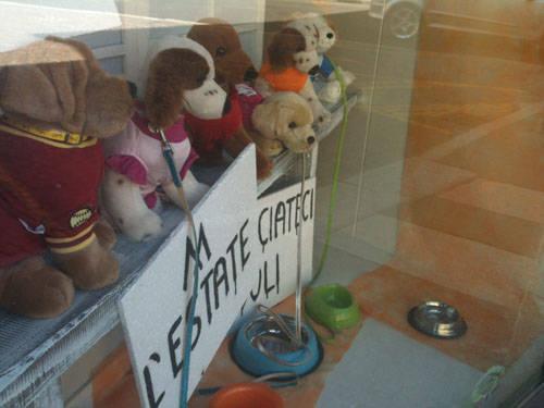 negozio cani