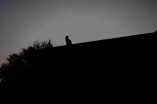 """""""Nella notte buia"""""""