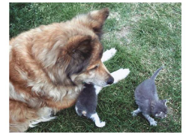 cane e gatto galleria