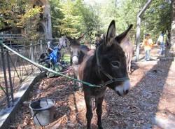 agrivarese 2011 animali
