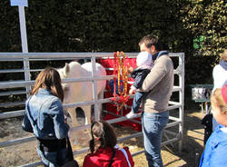 cavalli agrivarese 2011