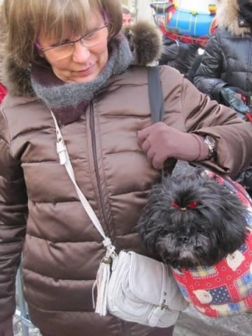 Cani da borsetta (inserita in galleria)