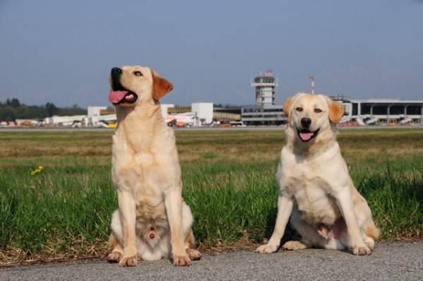 Tango e Cash, i cani fiutasoldi (inserita in galleria)